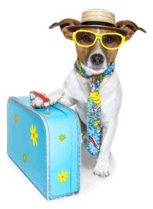 dog travelling image